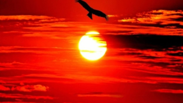 sunset_nature_birds_eagles